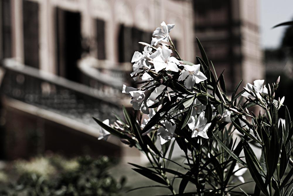 Villa Manodori - giardino esterno